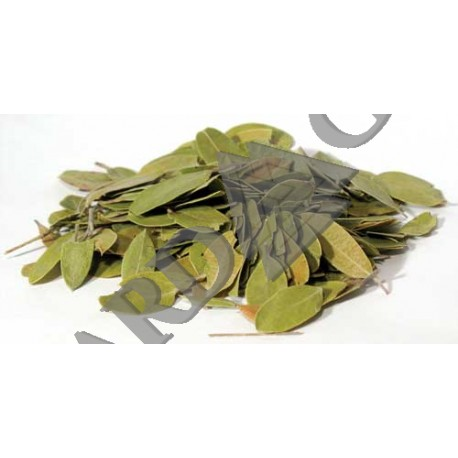 Bearberry Dried Ritual Herb