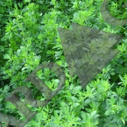 Alfalfa Dried Ritual Herb