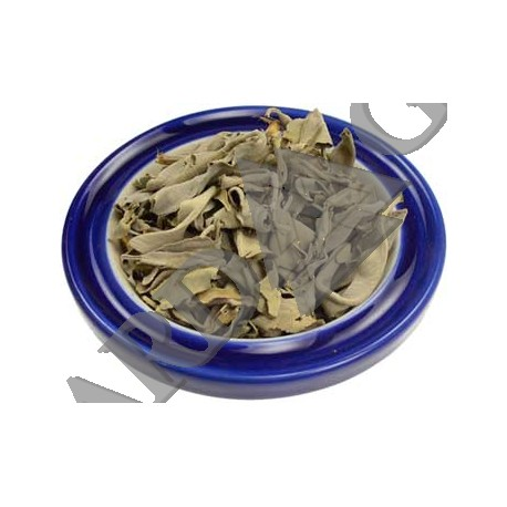 White Sage Cut Dried Ritual Herb