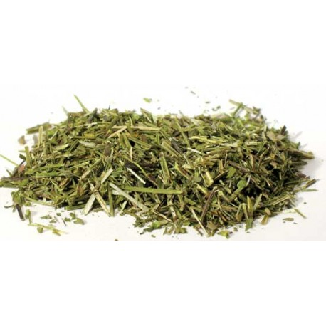 Skullcap Dried Ritual Herb