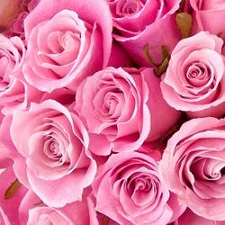 Rose Petals Pink Dried Ritual Herb