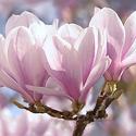 Magnolia Oil