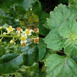 Frankincense & Patchouli Incense